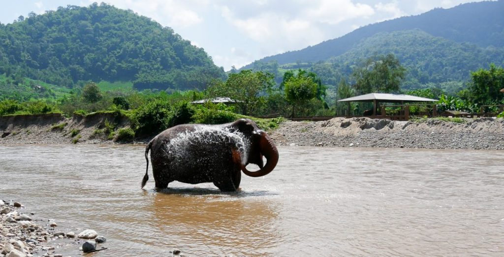 Elefanten baden im Elefant Nature Park