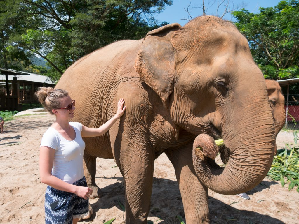 Elefanten füttern im Elefant Nature Park