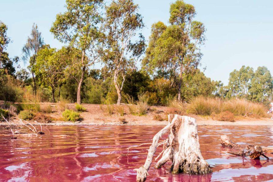 Pink Lake im Westgate Park Melbourne