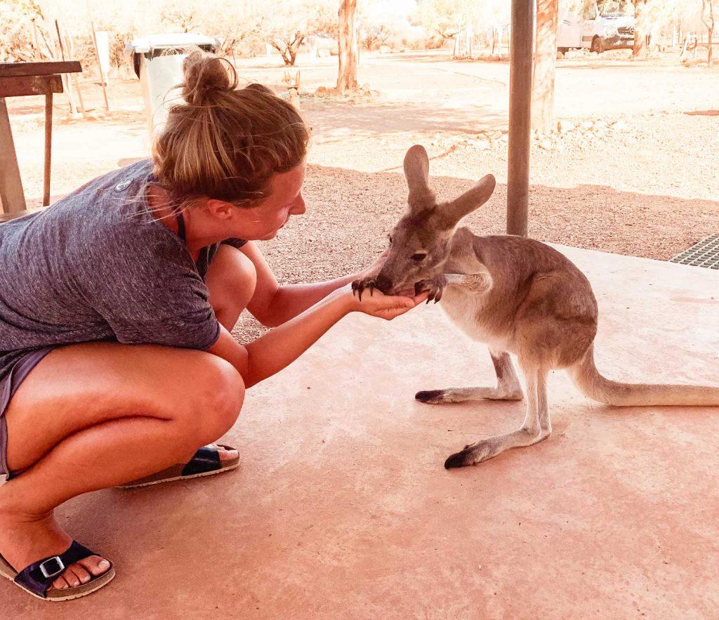Känguru in der Bullara Station, Westaustralien