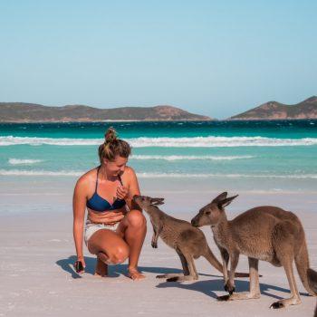 Kängurus am Strand in der Lack Bay in West Australien