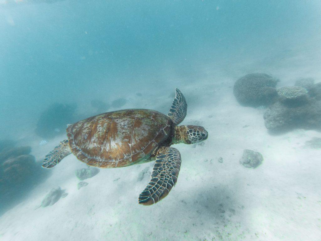 Schildkröte im Cape Range Nationalpark