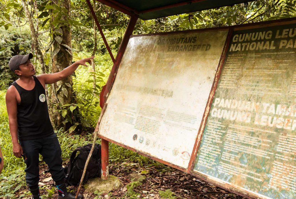 Regenwald Trekking Sumatra