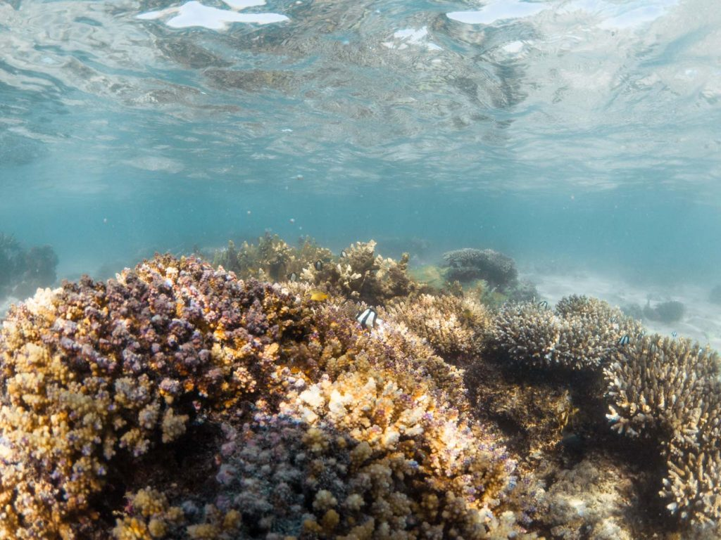 Ningaloo Riff in Westaustralien