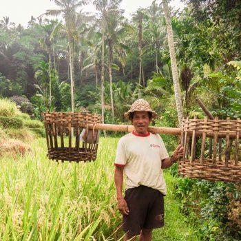 Reisbauer Tegallalang Reisterassen in der Nähe von Ubud