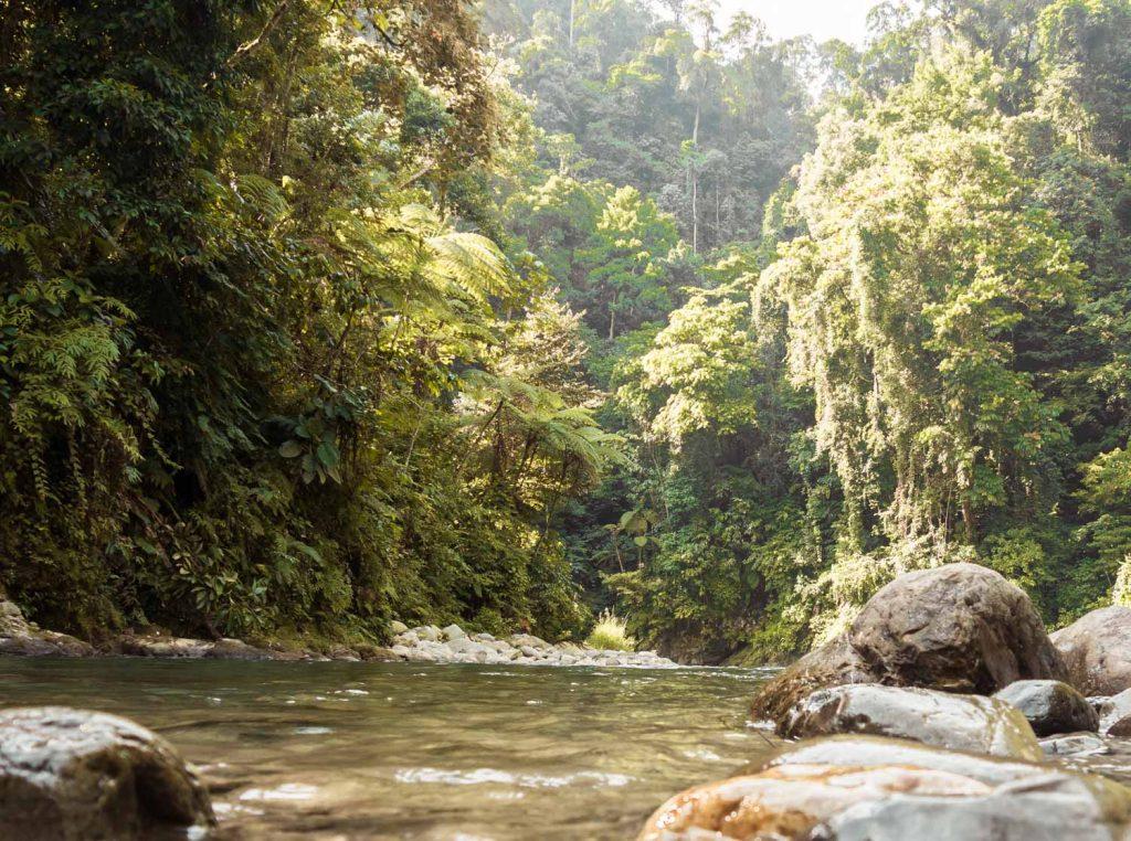 Gunung Leuser Nationalpark Regenwald