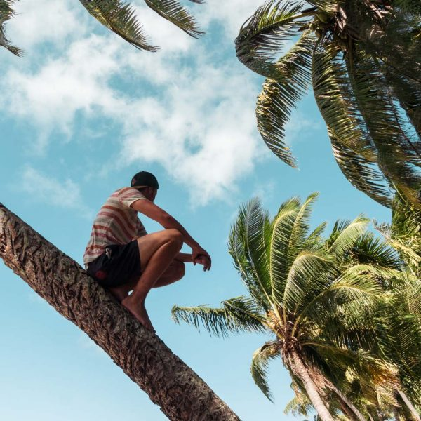 Palmen auf Naviti auf den Yasawa Inseln